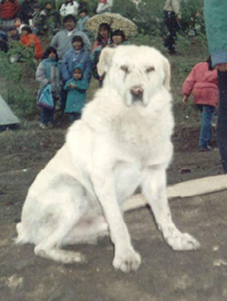 tonel el perro minero